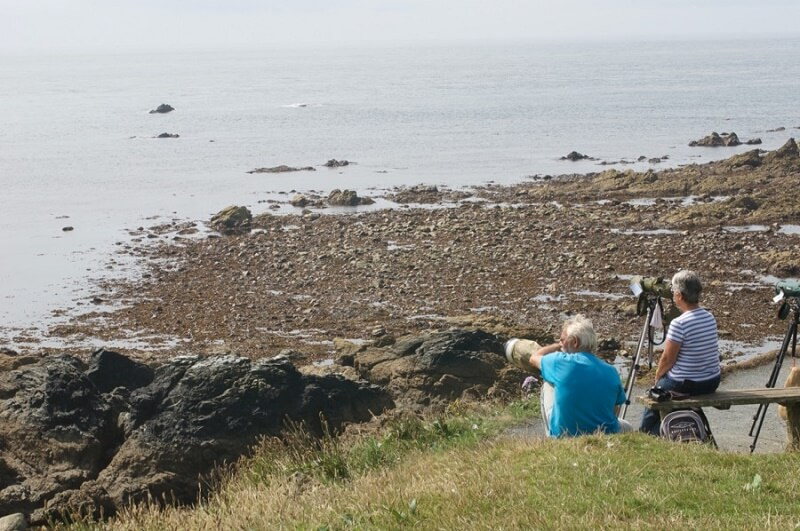 wildlife watching National Trust Cornwall